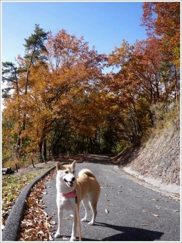 敷島公園4