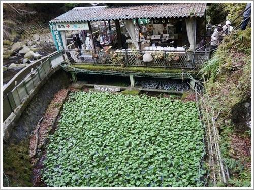 浄蓮の滝24