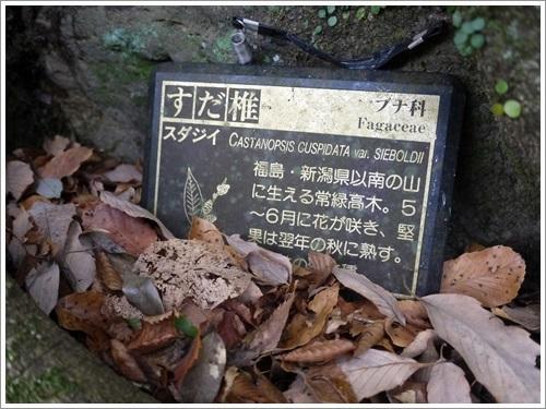 浄蓮の滝28