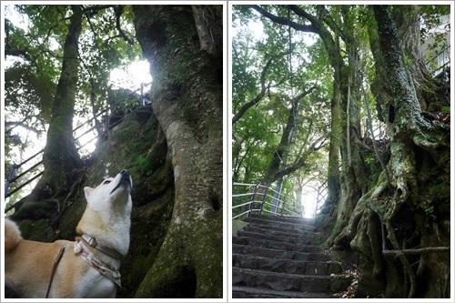 浄蓮の滝29