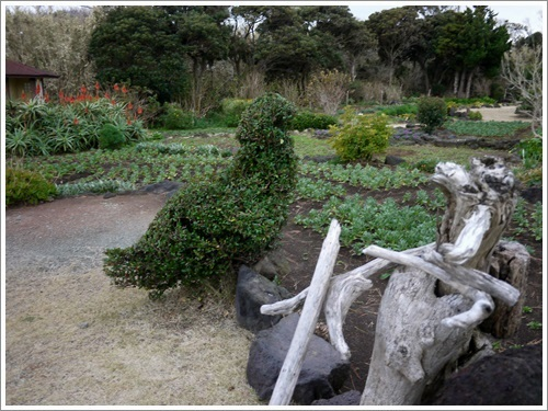 爪木崎花園3
