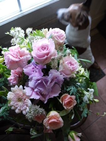 flower 2011-6 015