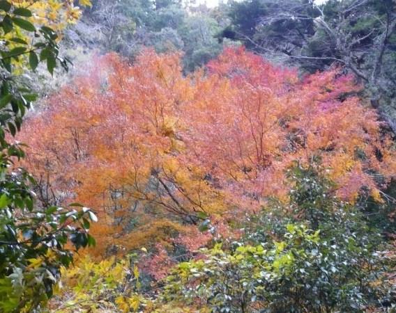 s-もえる秋8