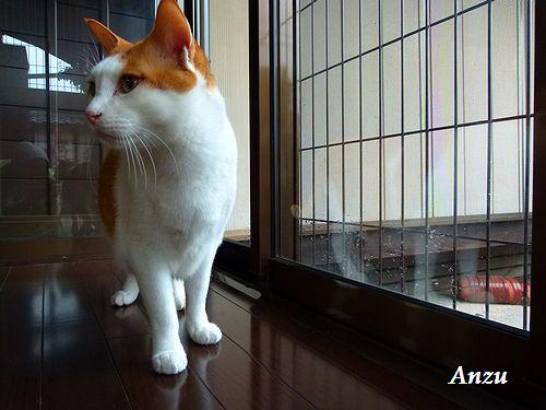 anzu29_20120714201142.jpg