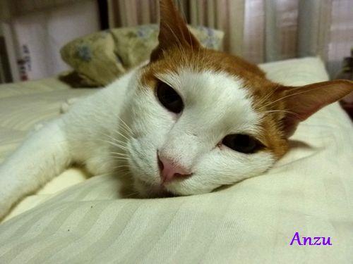 anzu64_20130729140210.jpg