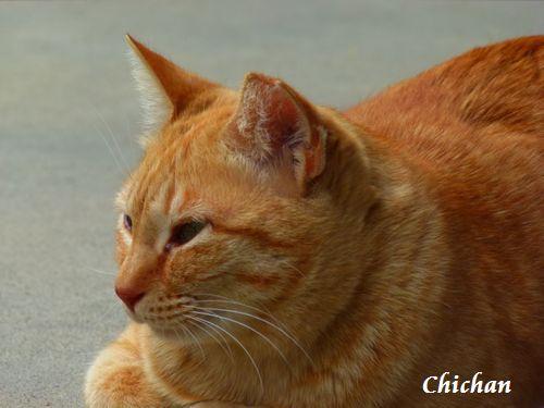 chichan12.jpg