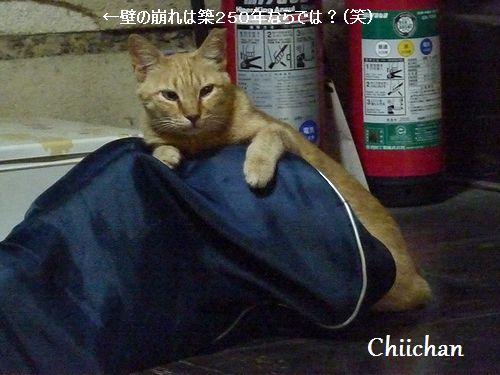chichan21.jpg