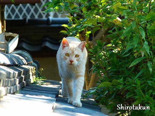 chichibi156.jpg