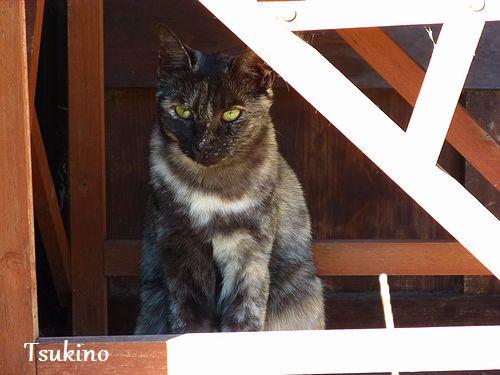 chichibi176.jpg