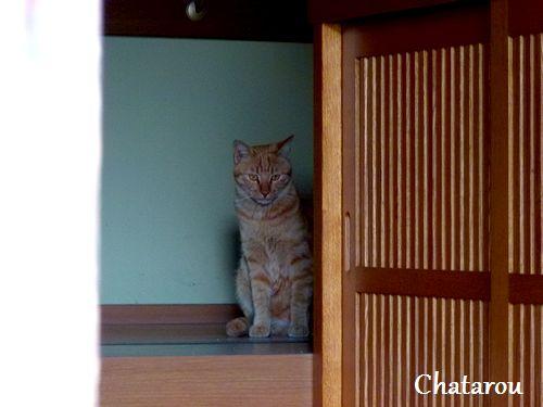 chichibi186.jpg