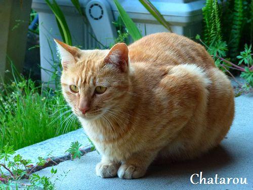 chichibi194.jpg