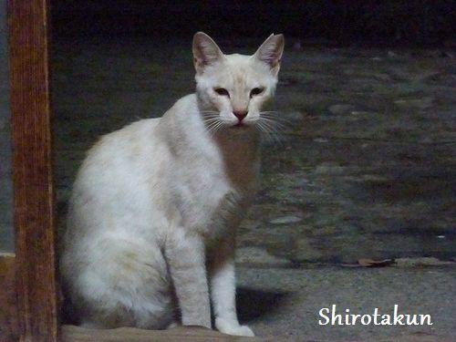 chichibi210.jpg