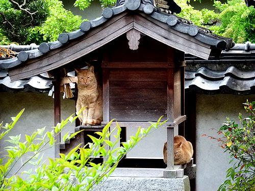 chichibi32_20130508004342.jpg