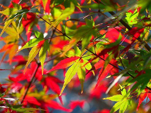 niwa83_20121108152440.jpg