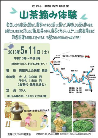 山茶摘み2013