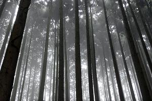 ブログ杉木立-2