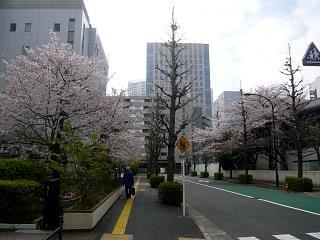 スポセンの桜(その1)