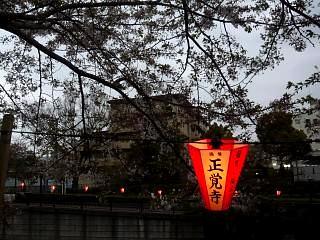 目黒川(桜その10)