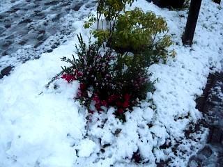 雪景色(その6)