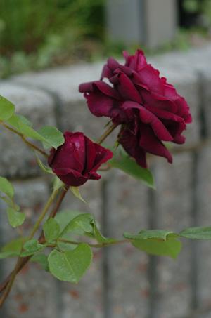 blackberrynip2010508-5.jpg