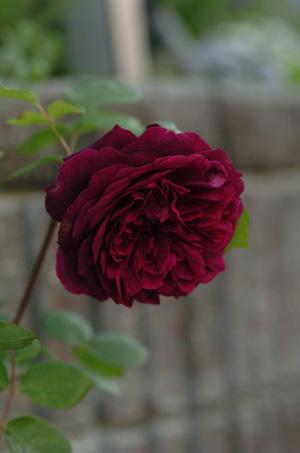 blackberrynip2010510-4.jpg