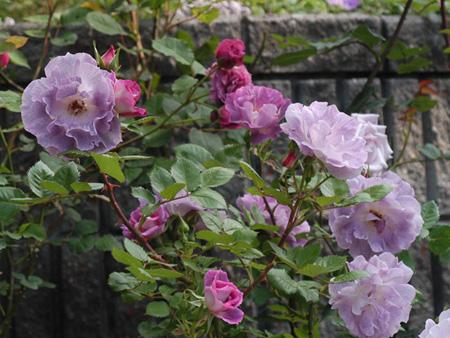 blueforyou2010509-1b.jpg