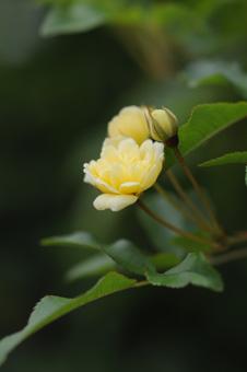 kimokkou2010424-3.jpg