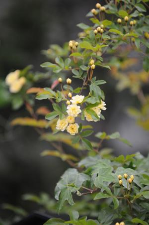 kimokkou2010426-1.jpg