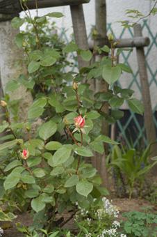 matilda2010506-3.jpg