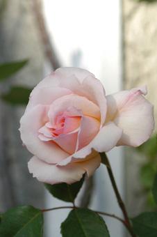 ophelia2010517-2.jpg