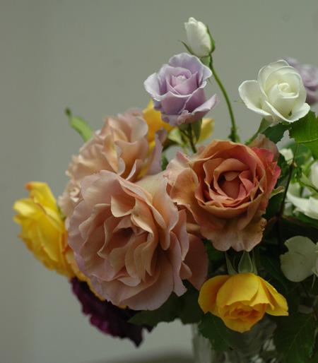 roses2010523-3.jpg