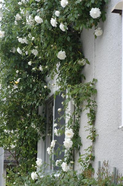 wall2010514-2.jpg