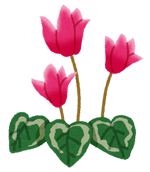 flower_cyclamen.png