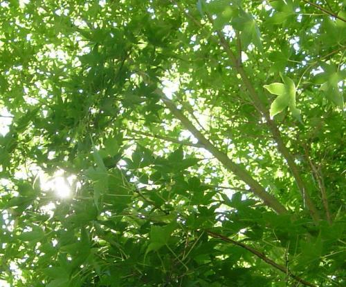 穏やかな木漏れ日