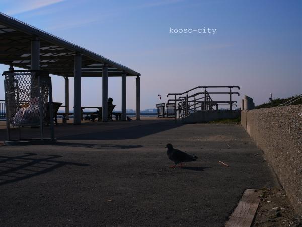ハトとロッキンチェアと海