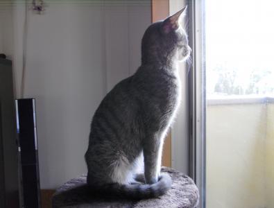 窓の寅次郎