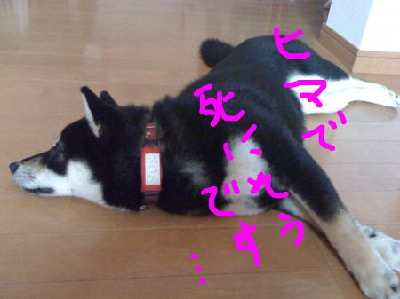 snap_sapphire16_20103023100.jpg
