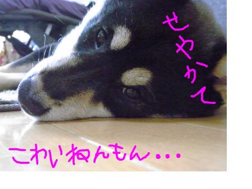 snap_sapphire16_201031115528.jpg