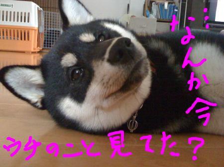 snap_sapphire16_20103322249.jpg