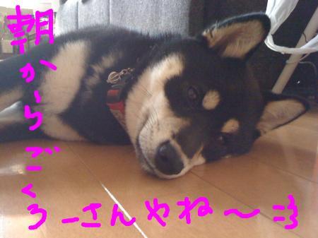 snap_sapphire16_20103322588.jpg