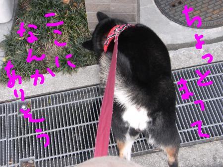 snap_sapphire16_20104123545.jpg