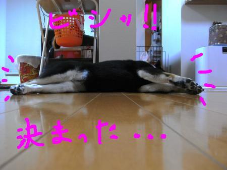 snap_sapphire16_201045232431.jpg