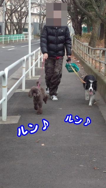 新年初散歩4