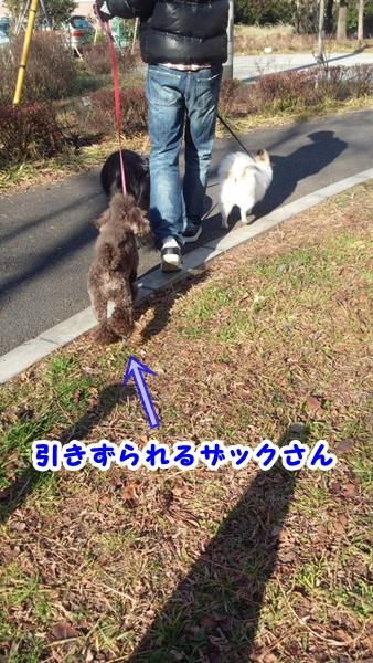 リハビリ散歩3