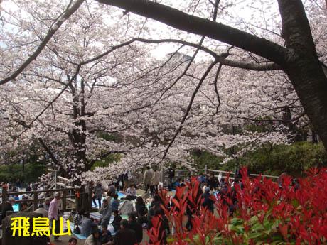 ブログ用桜1