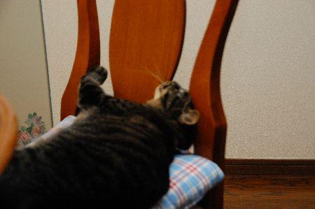 20100508kotetsu4.jpg