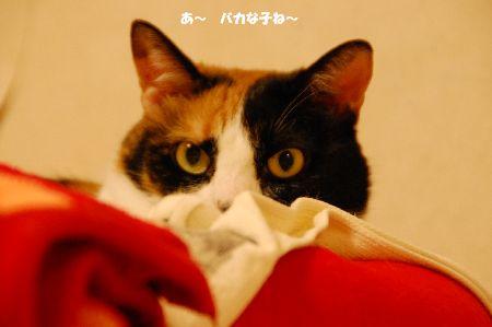20100508mikan.jpg