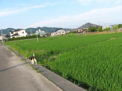 001_20110531203850.jpg