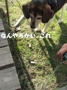 003_20111113192208.jpg