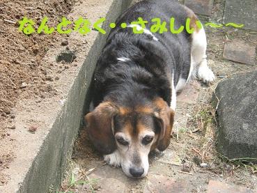004_20111009220738.jpg